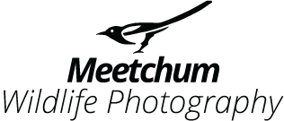 Meetchum Photography – Willi Van Boven