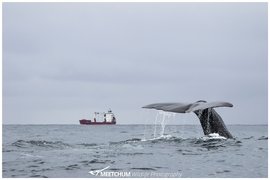 Spermwhale Meetchum Photography