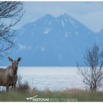 Moose Meetchum Photography